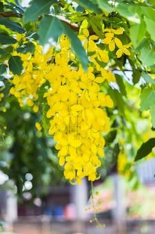I fiori freschi sono di colore giallo dorato