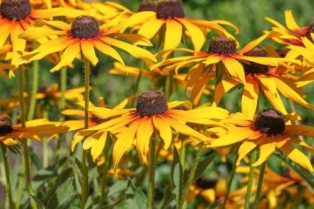 I fiori gialli dell'estate si chiudono su