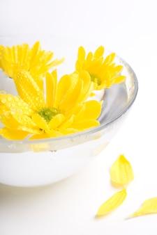I fiori gialli si chiudono su che galleggia in acqua