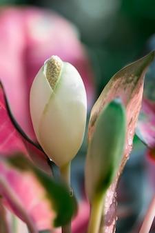 I fiori stanno per fiorire