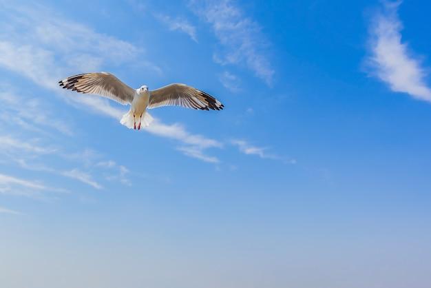 I gabbiani stanno volando nel cielo blu con nuvole. gabbiani