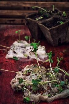 I gambi germogliano le piante in marna