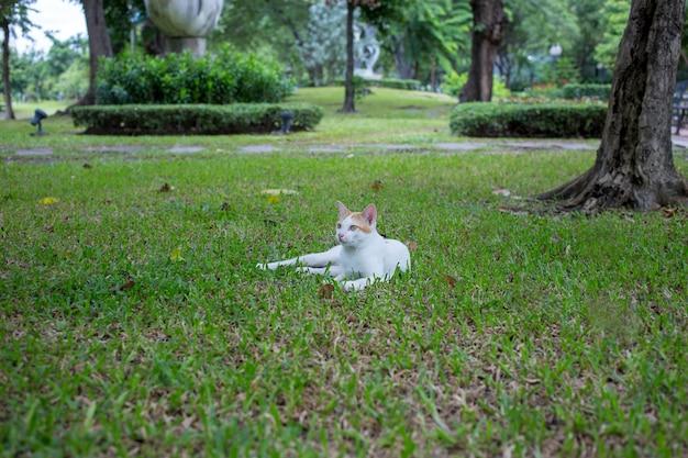 I gatti bianchi svegli che giocano sul pavimento, mettono a fuoco selettivo