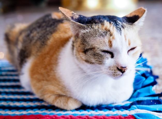 I gatti marroni dormono su tappeti colorati.