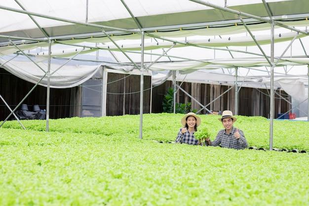 I giardinieri di sesso maschile e femminile stanno raccogliendo ortaggi biologici raccolti dalla fattoria di ortaggi hydroponics.