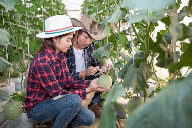 I giovani agricoltori stanno analizzando la crescita degli effetti del melone sulle fattorie in serra