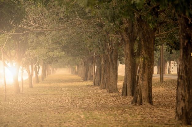 I grandi alberi su entrambi i lati.