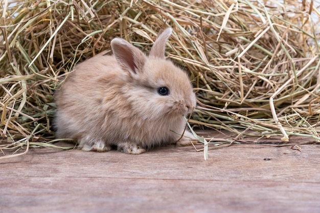 I piccoli conigli neonati hanno messo le orecchie