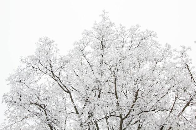I rami degli alberi in una giornata nevosa nella foresta invernale
