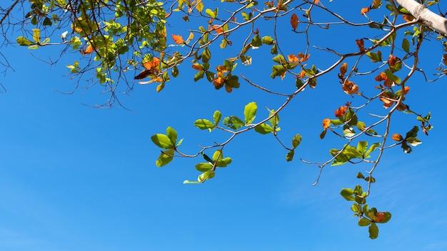 I rami di alberi incorniciano le belle foglie verdi contro chiaro cielo blu