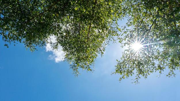 I rami di alberi incorniciano le belle foglie verdi contro il chiaro fondo del cielo blu
