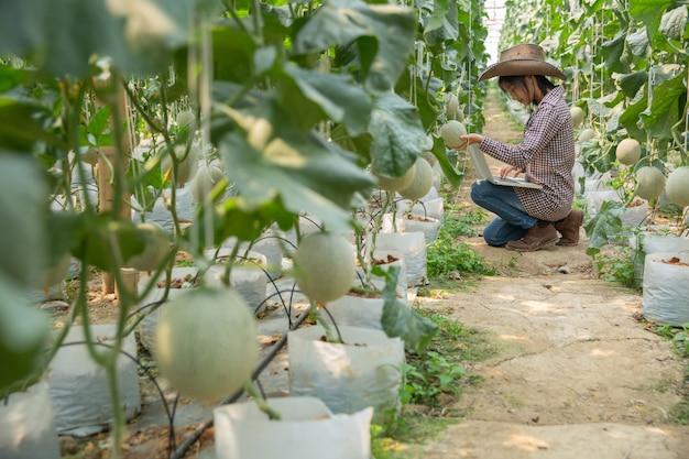 I ricercatori di piante stanno controllando gli effetti del melone.