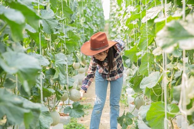I ricercatori di piante stanno studiando la crescita del melone.