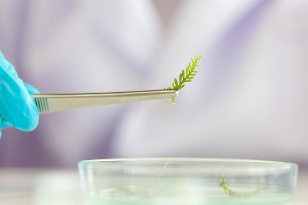 I ricercatori stanno studiando le specie vegetali