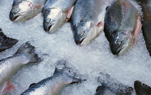 I salmoni di mare di pesce si trovano sul ghiaccio nel negozio o in cucina