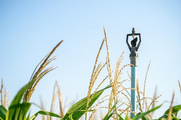 I sistemi idrici degli agricoltori di spinger aiutano l'acqua a diffondersi bene e risparmiano tempo di irrigazione per gli agricoltori.