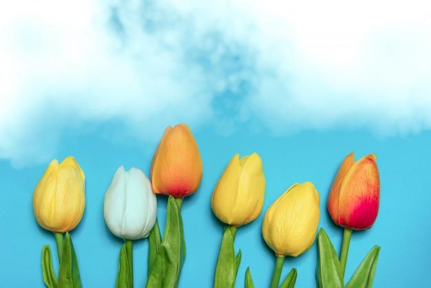 I tulipani fioriscono sugli ambiti di provenienza blu, concetto di stagione primaverile
