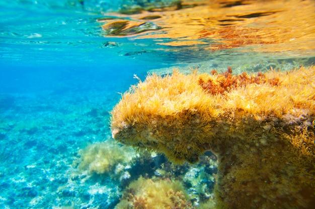 Ibiza formentera subacquea vista sul mare anemone