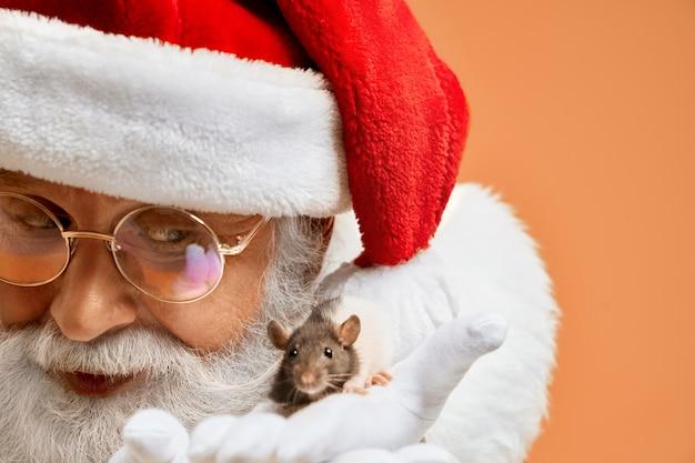 Il babbo natale senior in guanti bianchi addomestica il piccolo ratto