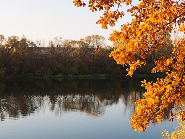 Il bagliore dorato dell'autunno. autunno con foglie d'arancio e copyspace