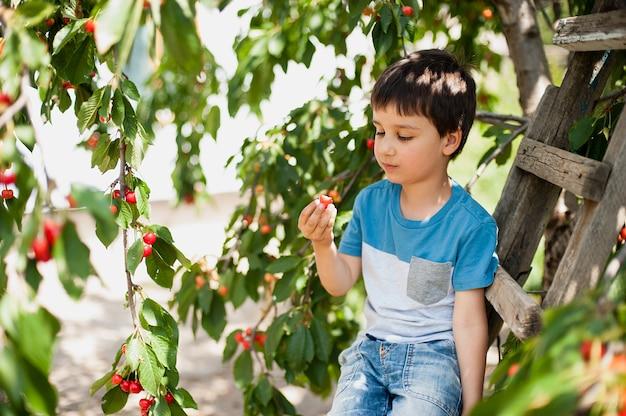 Il bambino foto una ciliegia dall'albero. infanzia sana, vacanze nel villaggio