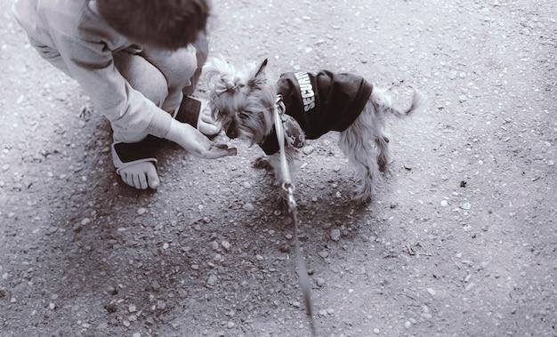 Il bambino nutre il cane dalla mano