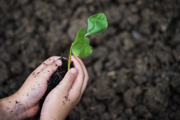 Il bambino passa l'albero della pianta su sporcizia