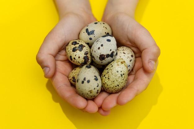 Il bambino passa le uova quial della tenuta su giallo
