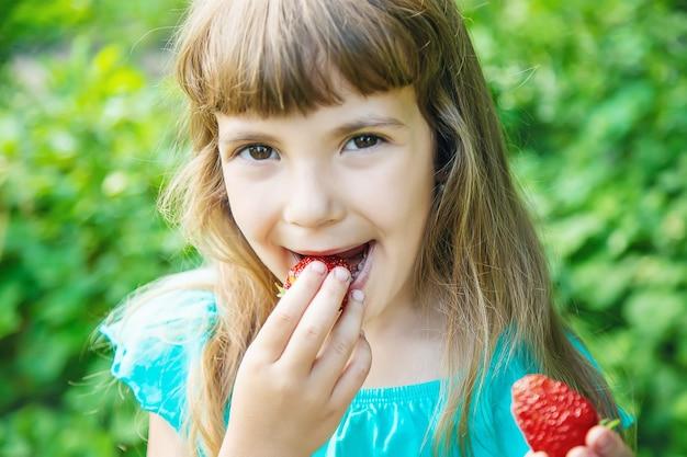 Il bambino raccoglie fragole nel giardino. messa a fuoco selettiva
