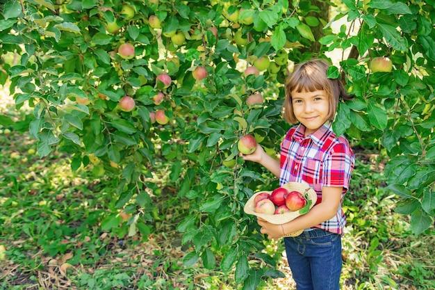 Il bambino raccoglie le mele nel giardino nel giardino