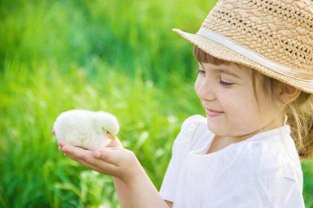 Il bambino tiene in mano un pollo. messa a fuoco selettiva