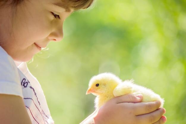 Il bambino tiene in mano un pollo.