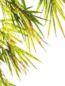 Il bambù può essere utilizzato per tutte le parti per avere molti vantaggi