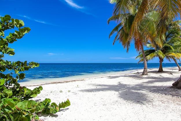 Il bellissimo paesaggio della spiaggia sabbiosa dell'oceano deserta