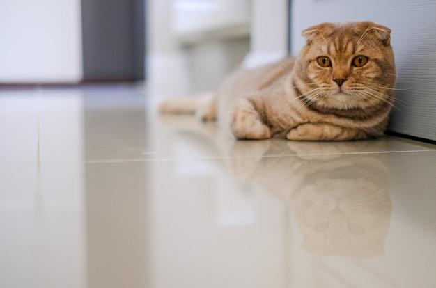 Il bello animale domestico dell'animale domestico di comodità del gatto del bambino si rilassa