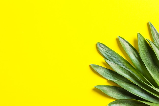 Il bello bucaneve va sul fondo di colore, spazio per testo