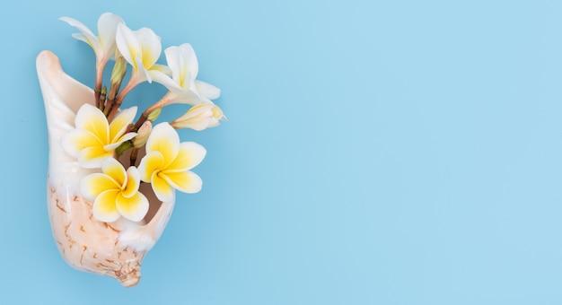 Il bello fiore tropicale della stazione termale di plumeria o del frangipane ha messo nella conchiglia su fondo blu