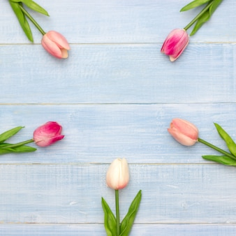 Il bello tulipano rosa fiorisce sul fondo di legno dell'estate blu con lo spazio della copia. biglietto di auguri di pasqua e primavera. stile minimal