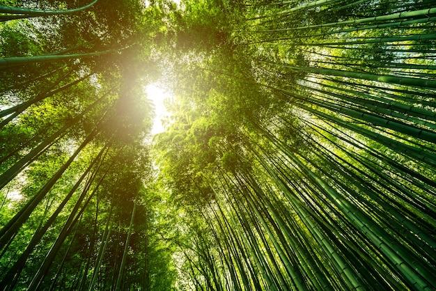 Il boschetto di bambù di arashiyama, stile giapponese del giardino di bambù, kyoto, giappone.