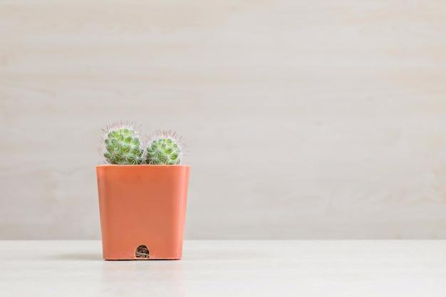 Il cactus del primo piano in vaso di plastica marrone sullo scrittorio di legno vago e sulla parete di legno ha strutturato il fondo