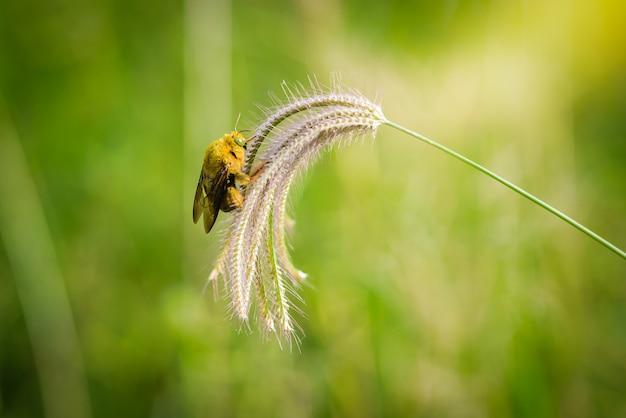 Il calabrone cattura sull'erba dei fiori