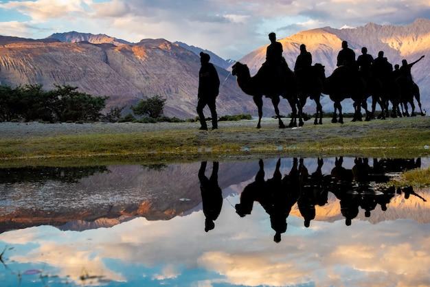 Il cammello della siluetta guida con la riflessione dell'acqua alla valle di nubra in leh ladakh, il jammu e kashmir, india.