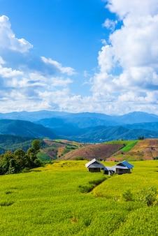 Il campo di riso dorato a terrazze con il cielo.