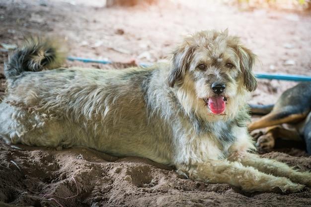 Il cane che si rilassa si sdraia sul pavimento