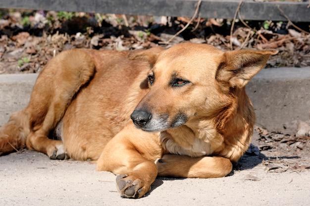 Il cane è un cagnaccio triste
