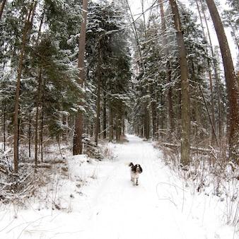 Il cane esegue lo spaniel inglese da salto nella foresta dell'inverno