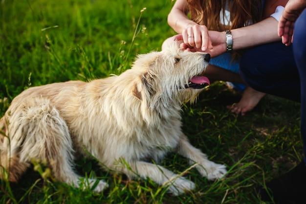 Il cane felice sta riposando con il proprietario nella natura
