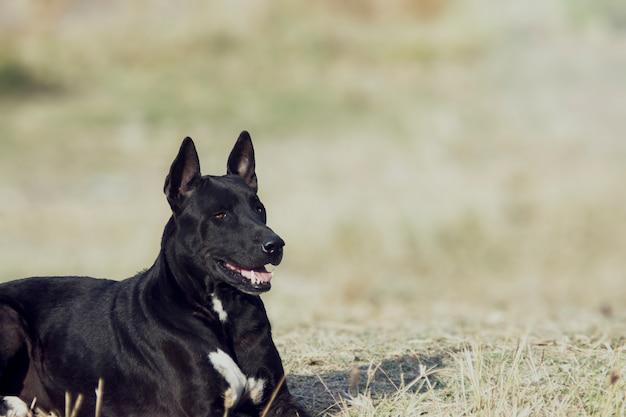 Il cane nero