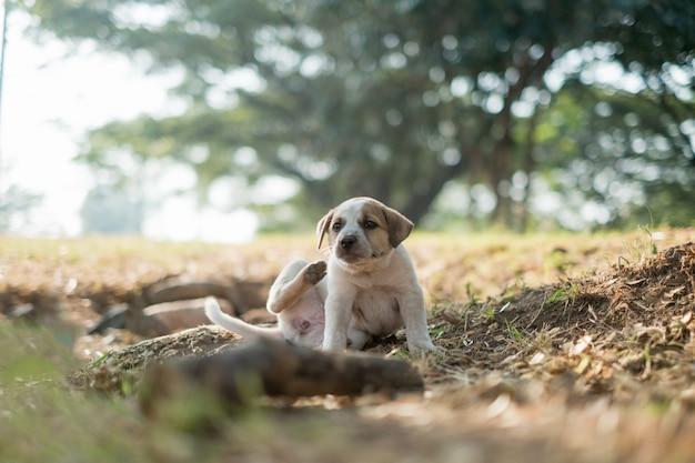 Il cane randagio graffia dietro l'orecchio con la gamba posteriore