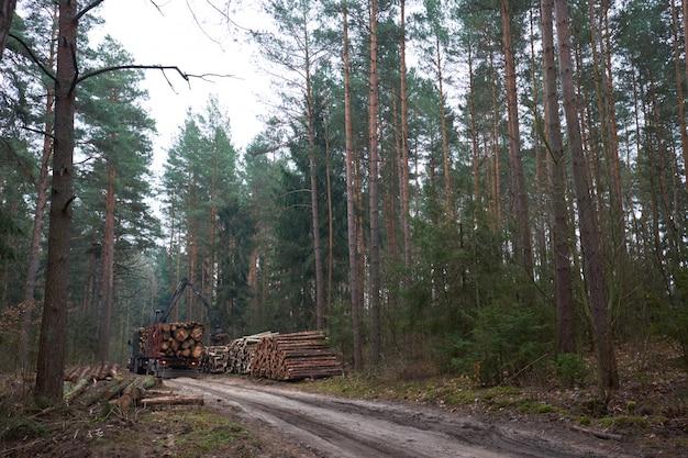 Il caricamento del camion della registrazione collega la foresta